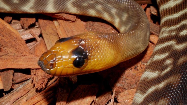 Hadí den, nebo den hadů?