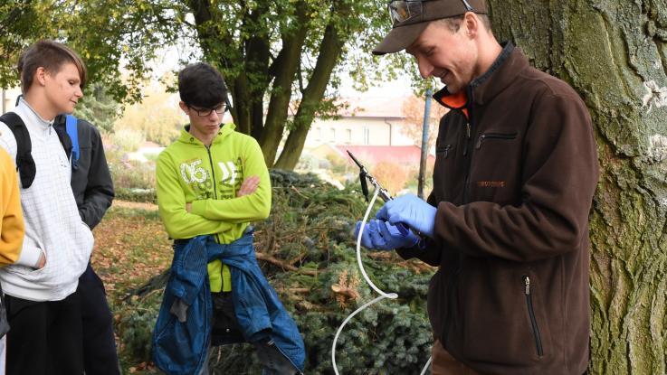 Mikroinjektáž stromů