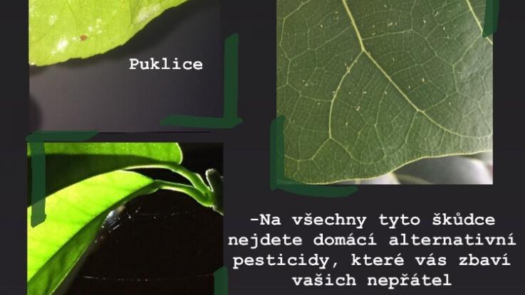 Rostlinolékařská soutěž