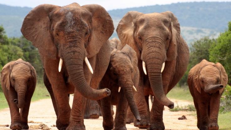 Když vám chce slon vyjádřit svou přízeň