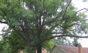 Biomechanika stromů