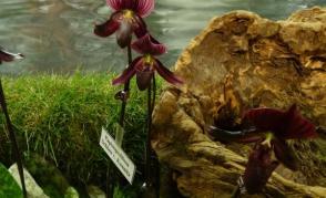 Za stotisíci květy kamélií a orchidejí do Německa
