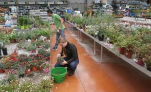 Očišťování hrnkových rostlin, Dadonville