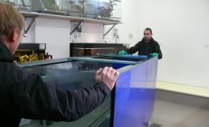 Nové biotopní akvárium pro chov terčovců (Jižní Amerika)