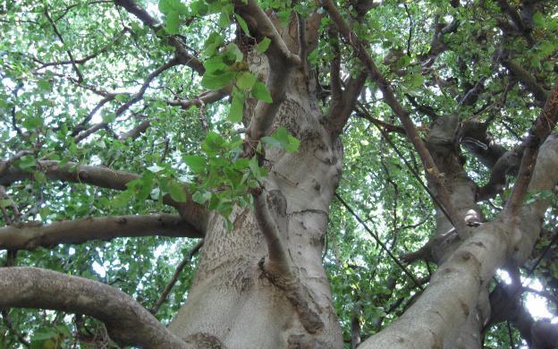 Arboristika